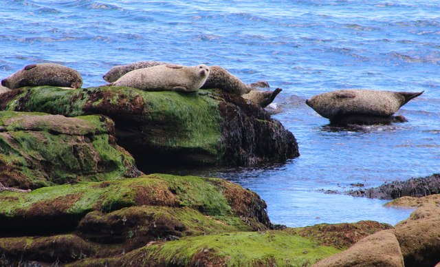 Group of seals on rocks