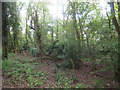 TL9396 : Scrub Woodland i Thompson Common by David Pashley