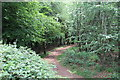 ST1885 : Path in Coed Cefn-onn by M J Roscoe