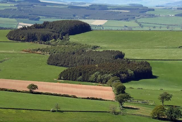 Zigzag Plantation