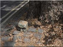 SK3436 : Ceramic head under a tree by Chris Gunns