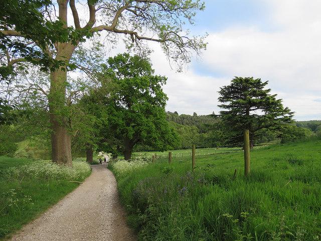 Osmaston Park: down hill to the Sawmill