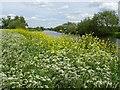 SO9035 : The River Avon near Twyning Fleet by Philip Halling