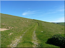 SJ0927 : Track up the side of Glan Hafon by Richard Law