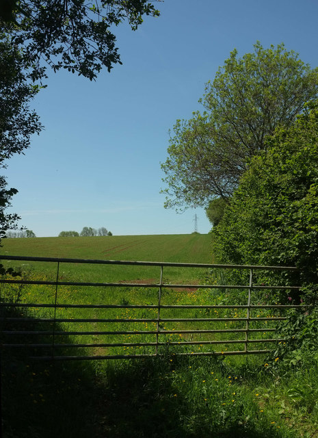 Field by Luscombe Cross