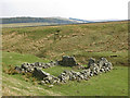 NY8446 : Ruined sheepfold in Middle Hope (3) by Mike Quinn