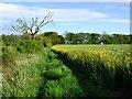 NZ3310 : Farmland, Neasham by Andrew Smith