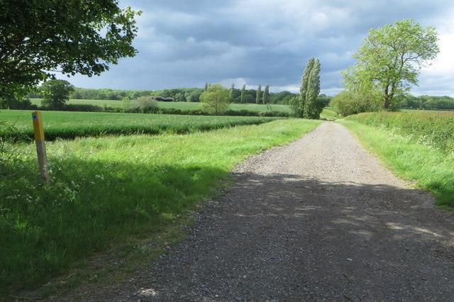 Bridleway to Great Hayes Wood