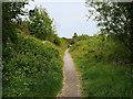 SD4158 : Footpath through Middleton Wood by David Dixon