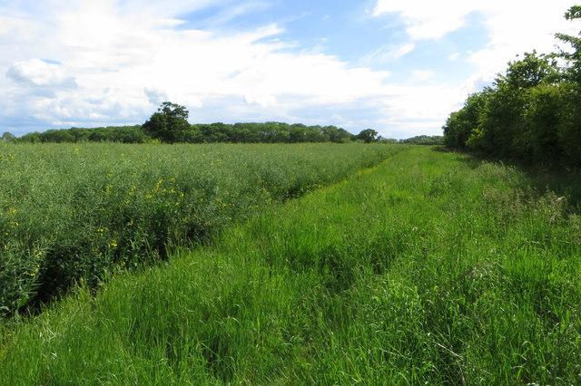 Barwick Wood