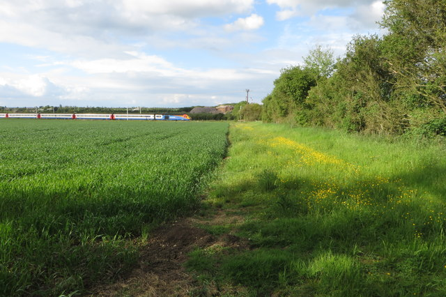 Buttercups down to the railway line
