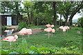 SH8378 : Chilean flamingos by Richard Hoare