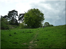 SO5074 : Tree on Whitcliffe Common (Ludlow) by Fabian Musto