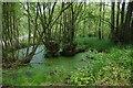 SO8675 : Pond near Dunclent Lane, near Stone, Worcs by P L Chadwick