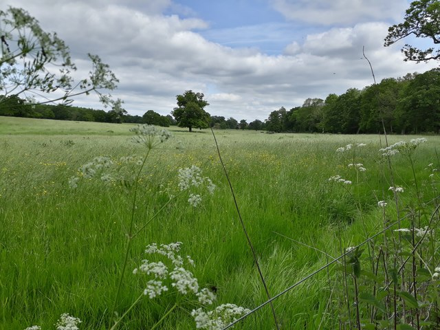 Redisham Hall - meadow and parkland, from bridlepath