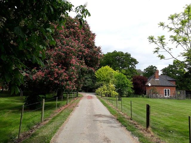 Bridlepath past Redisham Hall Nursery and Gardens