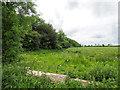 TF9205 : Strip of Woodland beside rape field by David Pashley