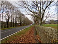 SO2316 : Carpet of dead leaves on a Glangrwyney pavement, Powys by Jaggery