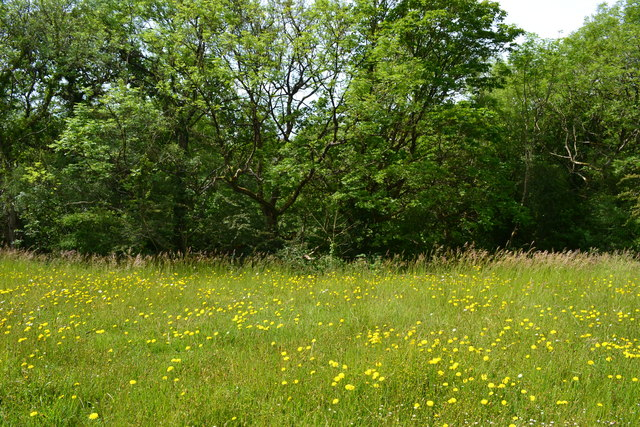 Meadow and woodland near King's Castle