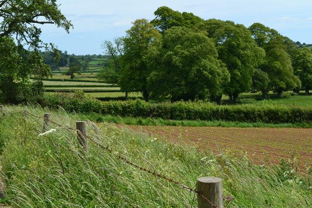 Fields and trees near Bridge Farm