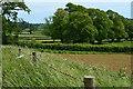 ST5645 : Fields and trees near Bridge Farm by David Martin