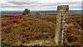 SE6992 : Waymarker, Blakey Ridge by Mick Garratt
