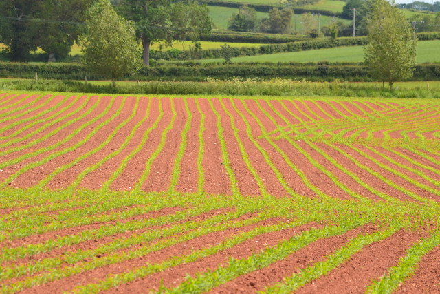 Red earth and green shoots