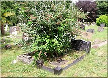 TG2408 : The overgrown grave of  Sewell Robert Burton Cowles by Evelyn Simak