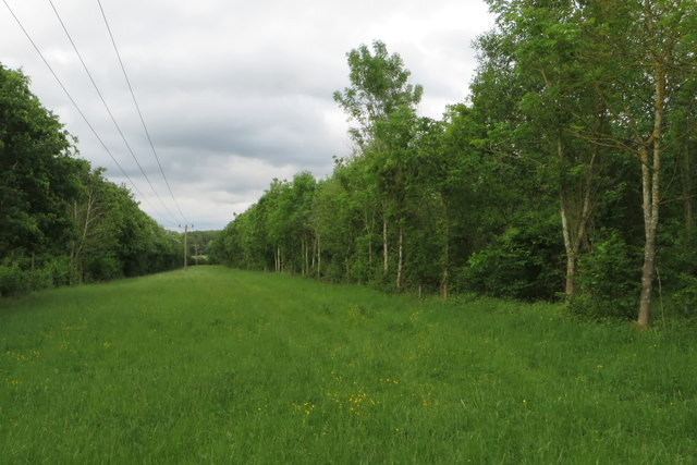 Power lines over a woodland ride