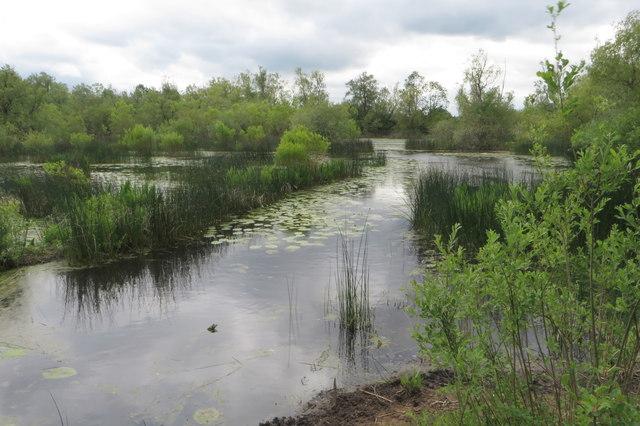 Felmersham Gravel Pits (nature reserve)