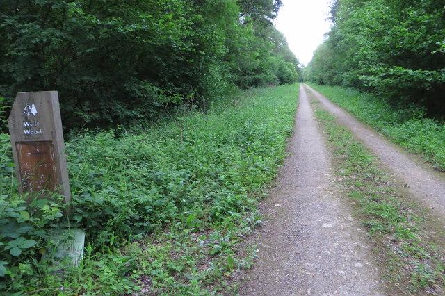 Track through West Wood