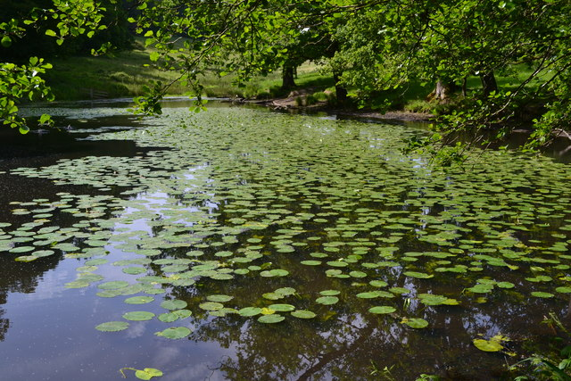 Upper lily pond at Stourhead