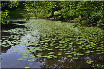 ST7634 : Upper lily pond at Stourhead by David Martin