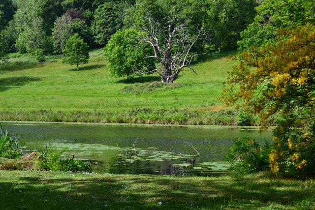 Stourhead Garden: View across lily pond
