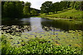 ST7734 : Stourhead Garden: lily pond by David Martin