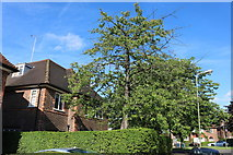 TQ2688 : Holne Chase, Hampstead Garden Suburb by David Howard