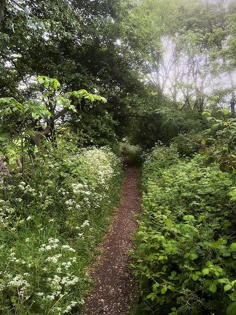 Path onto Heysham Moss