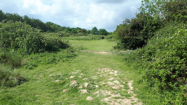 Path in Knowle Hill Conservation Site