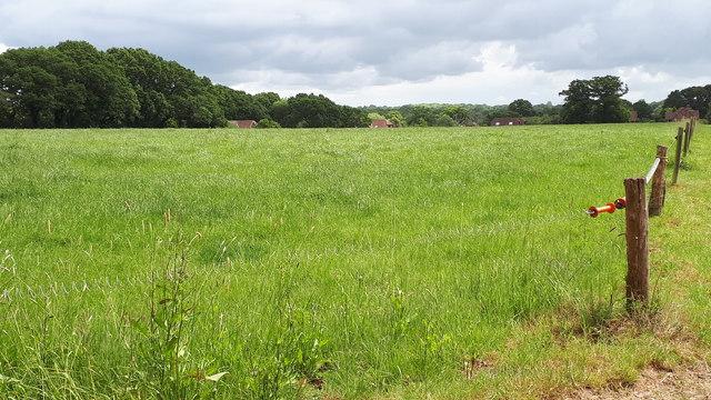 Field south of Thistle Ridge Farm