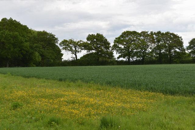 Flower-rich field margin on the edge of Wolves Wood