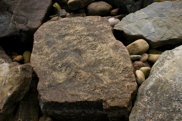 Trace fossils at Crail
