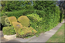TQ2688 : Topiary on Holne Chase, Hampstead Garden Suburb by David Howard