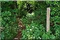 SP3004 : Public footpath entering The Plantation, near Bampton, Oxon by P L Chadwick