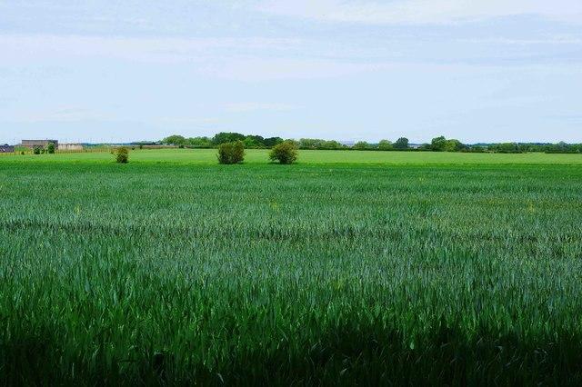 Field adjacent to The Plantation, near Bampton, Oxon