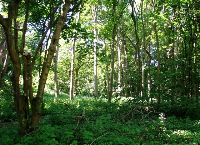 View into Old Wood from Whitlingham Lane