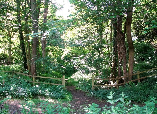A path leading into Old Wood