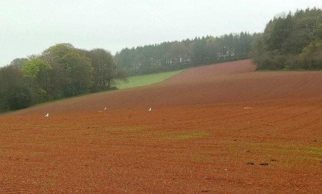 Towards Long Plantation