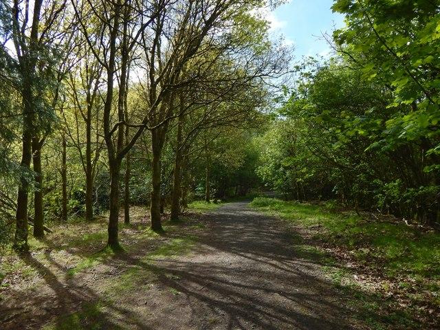 Path in Glen Park