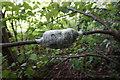 SE3728 : Tree graft in a small wood off Fleet Lane by Ian S