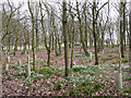 NY3954 : Woodland burial site, Carlisle Cemetery (1) by Rose and Trev Clough